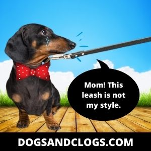 Your Dog Cries During Walks Because It's Scared Of Its Leash