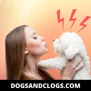 Your Dog Cries When Picked Up Because They're Held In The Wrong Way