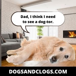 Your Dog Has An Infection