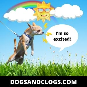 Your Dog Is Excited