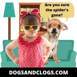 Your Dog Is Scared Or Shy