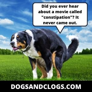 Your Dog Is Suffering From Constipation