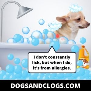 Your Dog Is Suffering From Contact Dermatitis