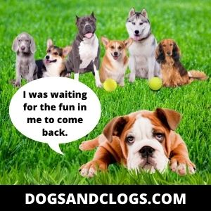 Your Dog Lacks Social Skills