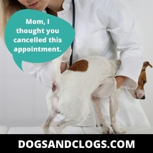 Your Dog May Have Trauma In Its Anal Sacs