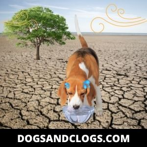 Your Dog Shouldn't Eat Goldfish Crackers Because It Can Cause Dehydration