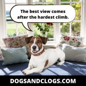 Your Dog Sits In High Places For A Better View