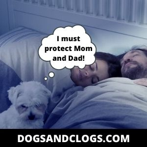 Your Dog Sleeps Between You And Your Husband Because They're Protective