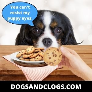 Your Dog Stares At You When You Eat Because You Reinforced The Behavior
