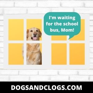 Your Dog's Waiting For Someone