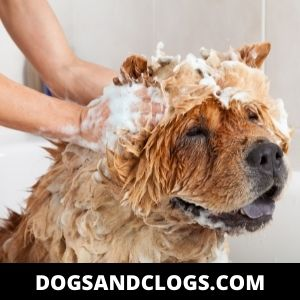 Address Fleas And Allergies