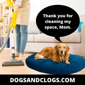 Always Keep Your Dog's Bed Clean