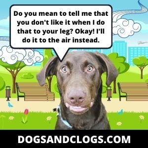Dog Air Hump Meme