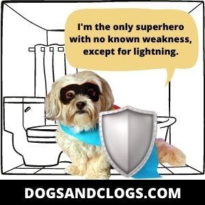 Dog Protecting Himself