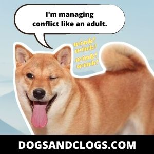 Dog Winks At You To Avoid Conflict