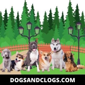Help Your Dog Socialize