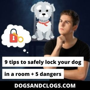 Is It Okay To Lock A Dog In A Room