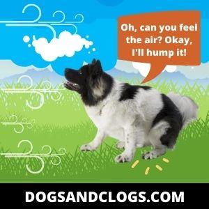 Neutered Dog Humps Air