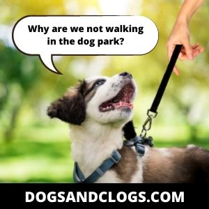 Switch Your Walking Routine To Calm A Sexually Excited Dog