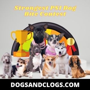 What Dog Has The Strongest PSI Bite