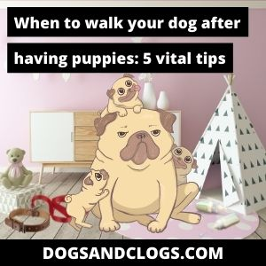 When Can I Walk My Dog After Having Puppies