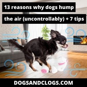 Why Do Dogs Hump The Air