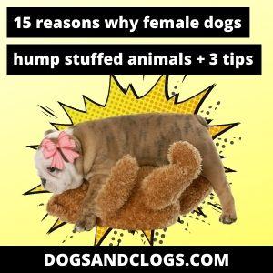 Why Do Female Dogs Hump Stuffed Animals