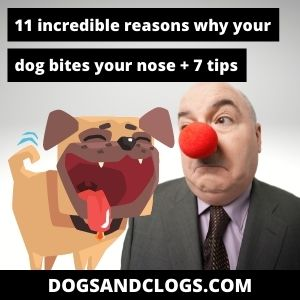 Why Does My Dog Bite My Nose