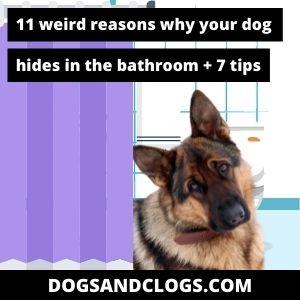 Why Does My Dog Hide In The Bathroom