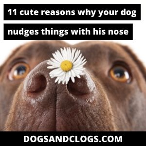 Why Does My Dog Nudge Things With His Nose