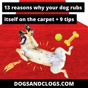 Why Does My Dog Rub Itself On The Carpet