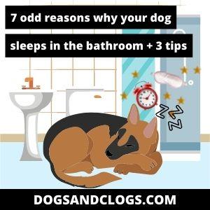 Why Does My Dog Sleep In The Bathroom