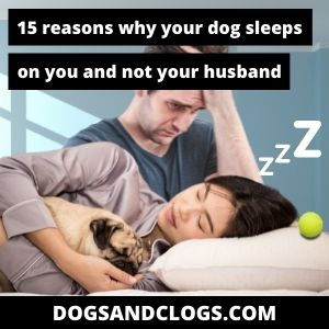 Why Does My Dog Sleep On Me And Not My Husband