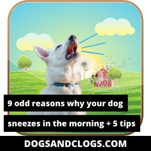 Why Does My Dog Sneeze In The Morning