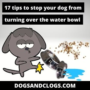 Why Does My Dog Tip The Water Bowl Over
