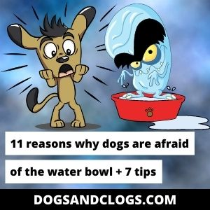 Why Is My Dog Afraid Of The Water Bowl