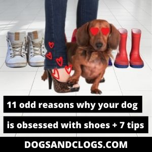 Why Is My Dog Obsessed With Shoes