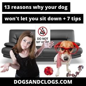 Why Won't My Dog Let Me Sit Down