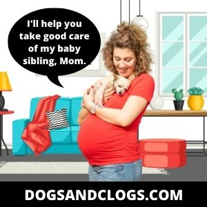 Your Dog Becomes So Cuddly All Of A Sudden When You're Pregnant