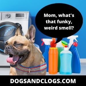 Your Dog Gets Irritated By Strong Odors
