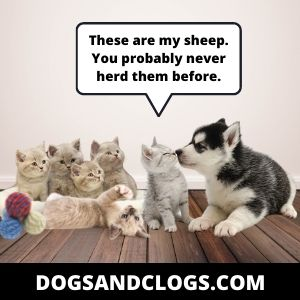 Your Dog Nudges Things With His Nose Due To Herding Behavior
