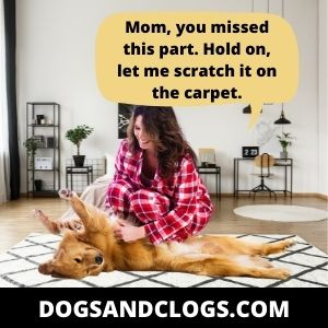 Your Dog Wants To Get A Good Scratch