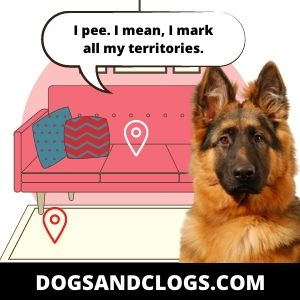Your Dog Won't Let You Sit Down Because Of Its Territorial Behavior