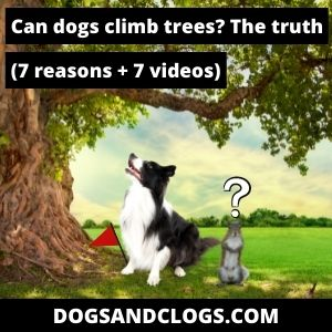 Can Dogs Climb Trees