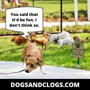 Dog's Improper Socialization Makes Him Scared Of Everything
