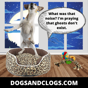 Dogs Wake Up In The Middle Of The Night Due To Strange Noises