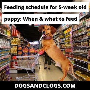 Feeding Schedule For 5 Week Old Puppy