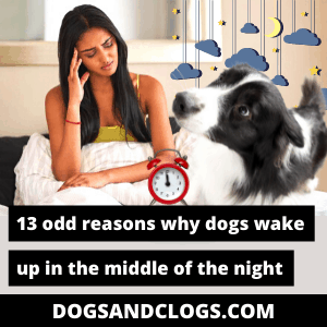 Why Does My Dog Wake Up In The Middle Of The Night