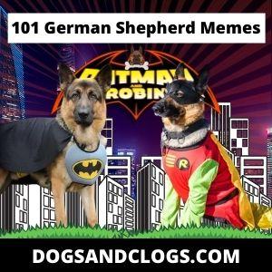 101 German Shepherd Memes