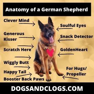 Anatomy Of A German Shepherd Meme